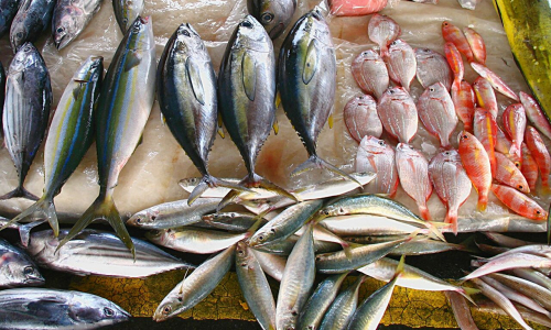 Названы 3 самых опасных сорта рыбы